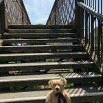 100th Blog – The Footbridge.