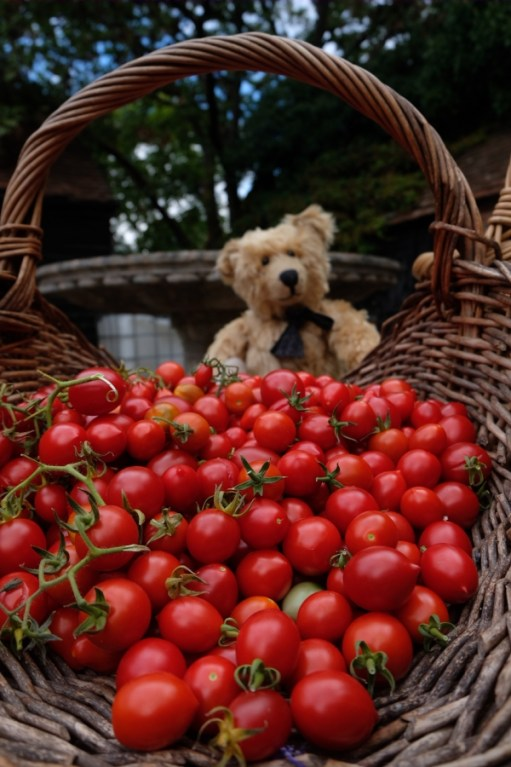 "Dahlia Day: ""Buy my loverly tomatoes"""
