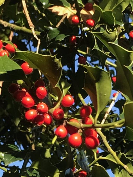 Over the Hills and Far Away: Holly.