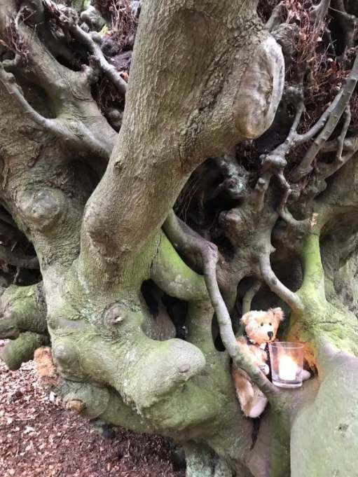 Lighting a Candle for Diddley: The Witches Broom tree