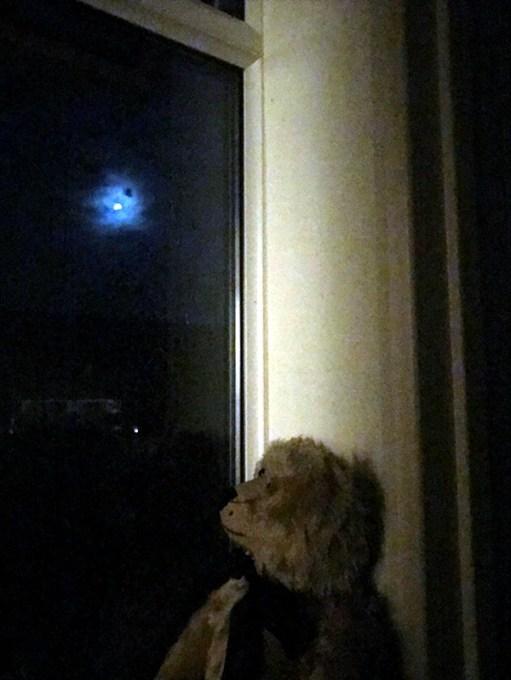 Super Blood Wolf Moon: Moongazer.