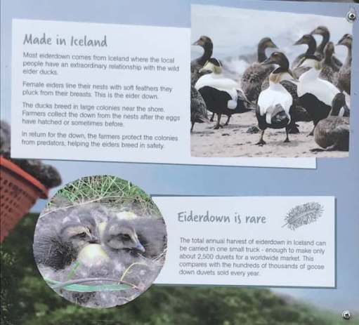 Cotswold Reverie: Now you know about eiderdowns!