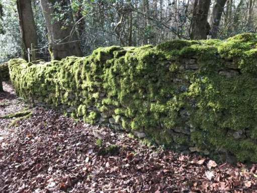 Cotswold Reverie: Wall covered in moss.