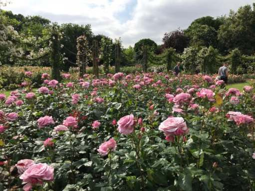 Tick tock. Smell the Queen's roses. Regent's Park, London.