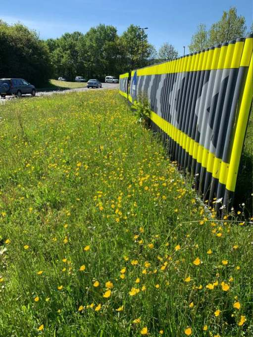 Buttercups and other wild flowers in front of the chevrons on the roundabout.