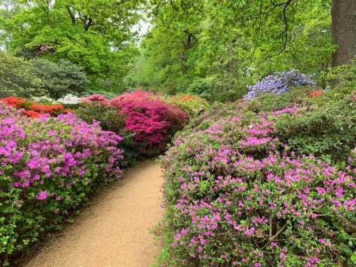 Pathway through a colourful garden.