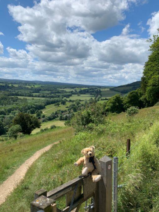 Bertie on a gate overlooking the Denbies hillside.