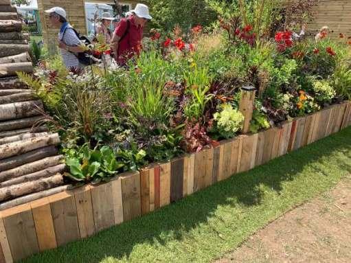 Many plants grown by the schoolchildren.