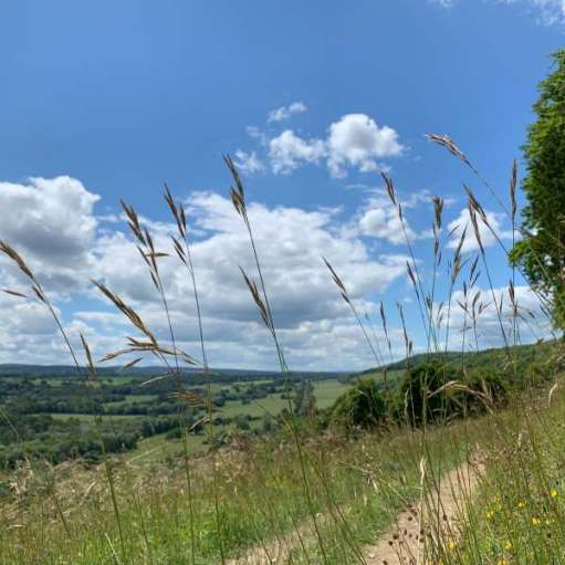 A view across the Surrey Hills on a Midsummer's Day.