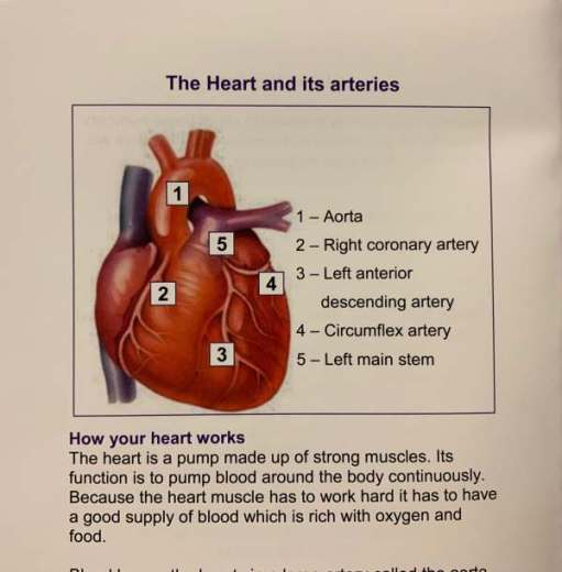 Poster describing the layout of the heart.