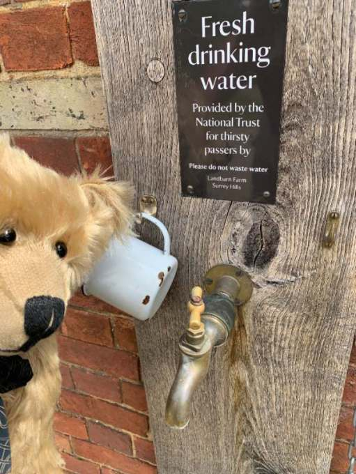 """Bertie looking at a tap. The sign above reads """"Water provided for thirsty passers-by""""."""