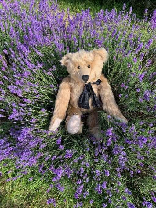 Bertie in the lavendar.