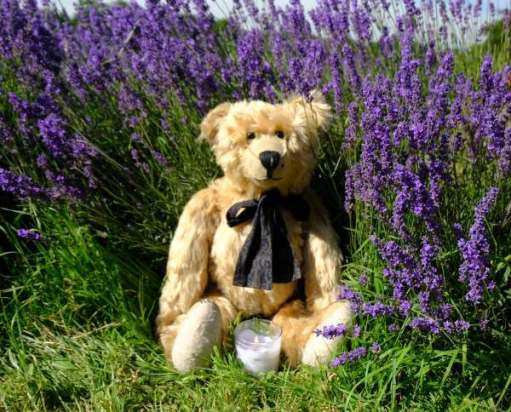 Bertie with a candle for Diddley in the lavendar.