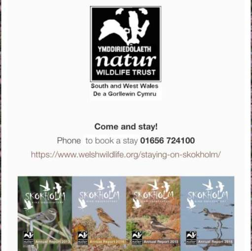 Poster for Welsh Wildlife advertising stays on Skokholm. Click the image for the webpage.