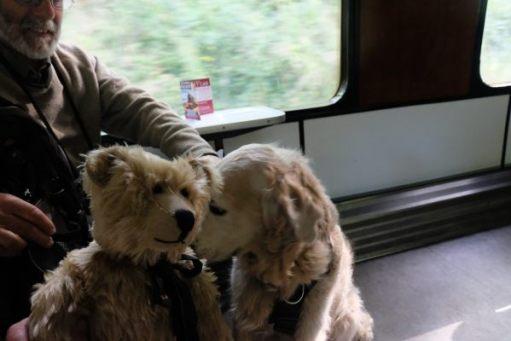 West Somerset Railway: Bertie alongside a Golden Retriever.