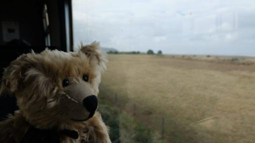 West Somerset Railway: Bertie enjoying the view from the train window across the beach with the mist drifting in.