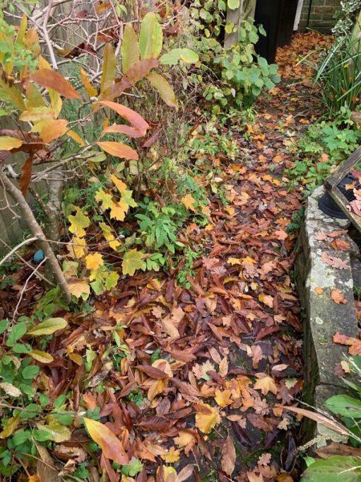 The back garden of Laurel Cottage under leaves.
