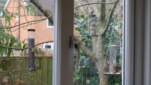 A collection of birds on the three feeders in Bobby's garden viewed through the kitchen window. The feeders are very close to the window.