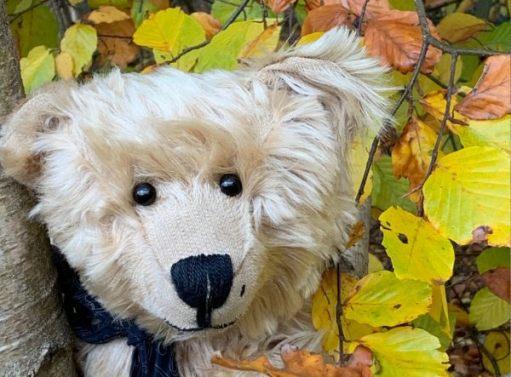 Bertie against an autumn backdrop in Abinger Roughs.