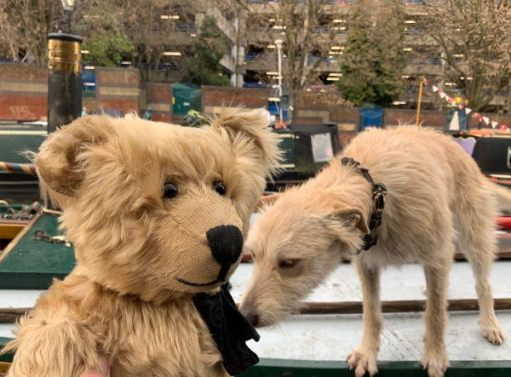 Bertie being sniffed by a dog on the roof of a boat.