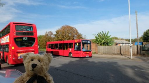 Near Morden Station - Bertie, with the rear of a No 157 Double Deck bus and an 80 heading to Belmont opposite.