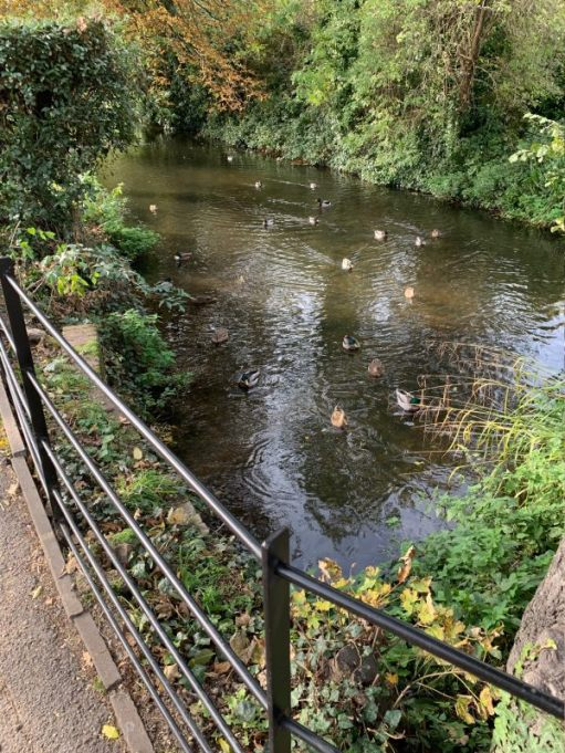 A view of the River Wandle.