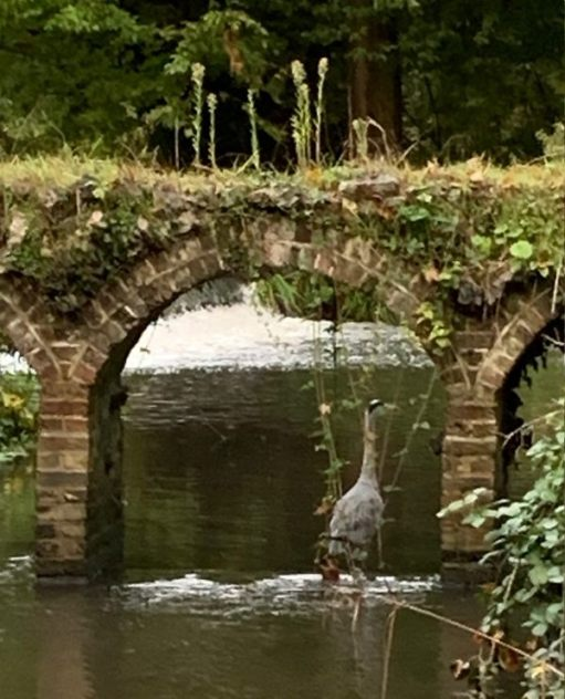 A heron in an old brick arch.