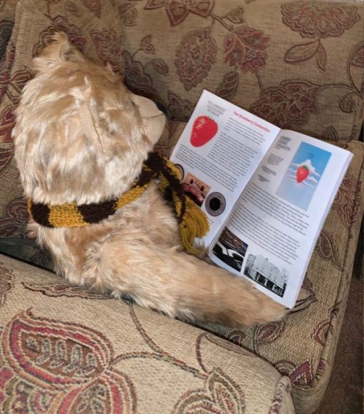 Bertie reading the Dorking Wanderers v Stockport County programme. Advert for the Strawberry Recording Studios and an article about the connection.