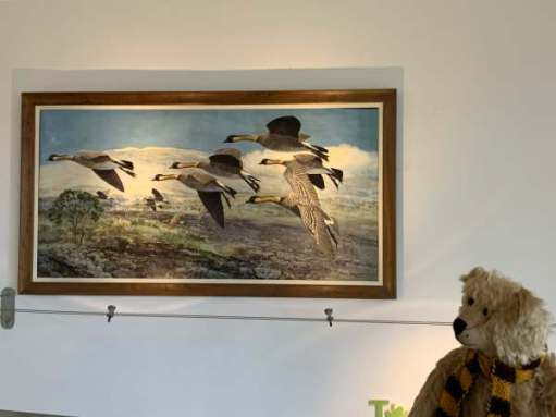 Bertie looking at Peter Scott's famous painting of Nene Geese in flight.