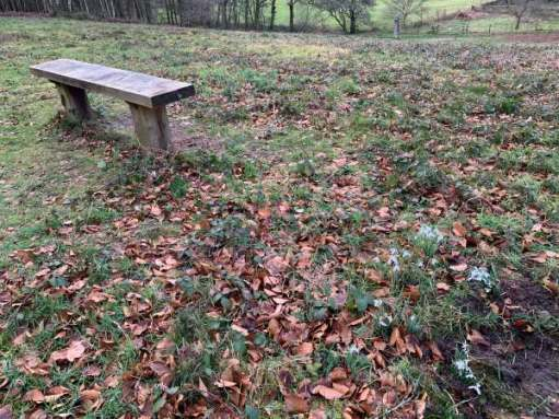 A bench on Swift's Hill amongst the remains of the autumn leaves on the ground.