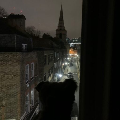 Bertie in the window of room 311, with the view of Fournier Street to Christ Church and Spitalfields all lit up at night.