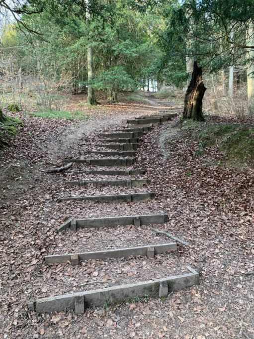 Rustic wooden-edged steps up through the forest.