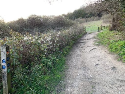 The path, rutted with tree routes. A way marker on the left and a gate to an open field in the distance.