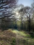 Covid-19 Guided Walk for One. Number 2: Holmwood Common.