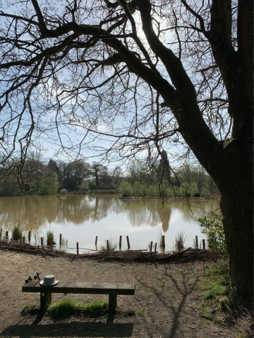 Fourwents Pond, with a tree and bench in the foreground.