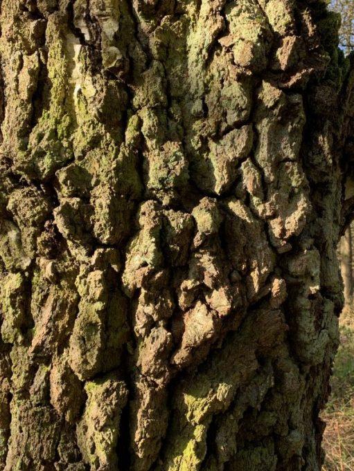 Close up of some gnarly tree bark.