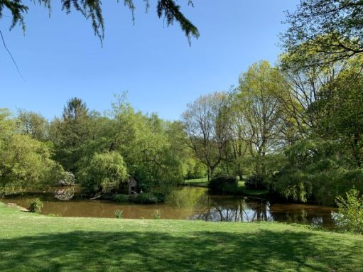 A lovely calm lake, with grass on one side and overhanging trees on the other.