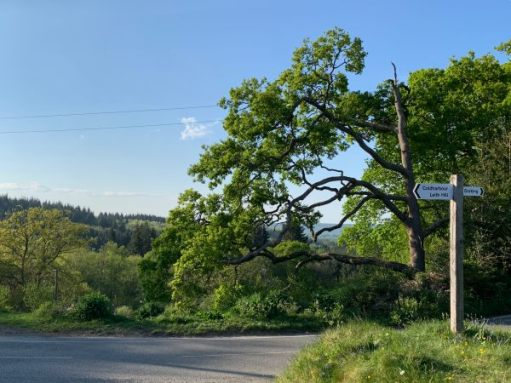 Open countryside outside Coldharbour. A T-Junction and wooden signpost.