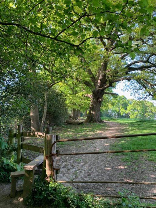 A stile alongside a metal farmer's gate between fields.