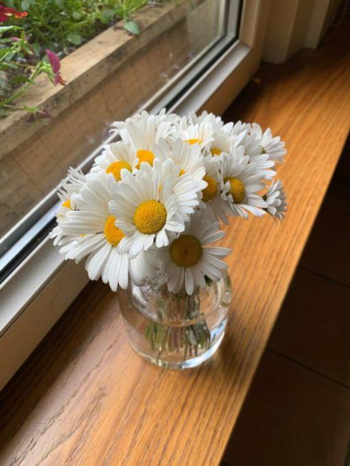 A vase of cut Moondaisies on the windowsill of Laurel Cottage.