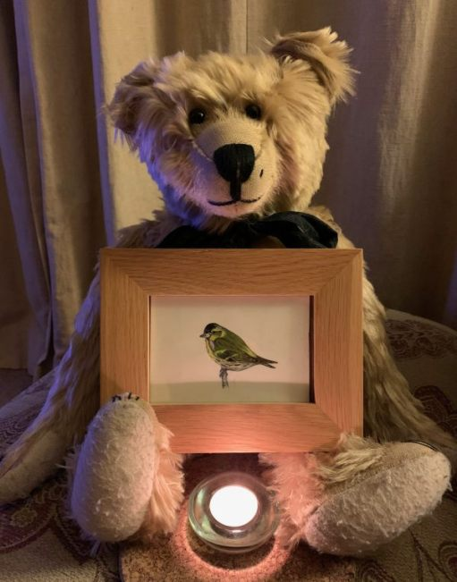 Bertie holding a framed picture of a Siskin with a lit candle for Diddley in front of him.