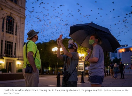 New York Times Article on the Purple Martin. Click on link towards the bottom of the blog for the PDF.