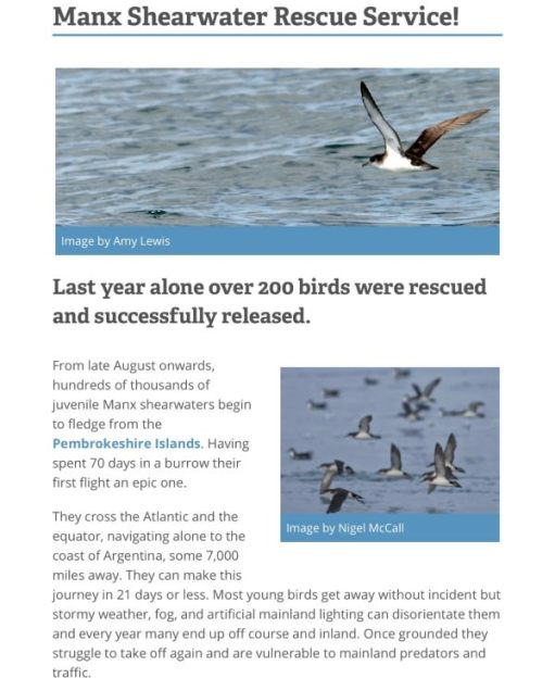 Manx Shearwater Rescue Service! Click on the image for the website this screenshot is taken from.