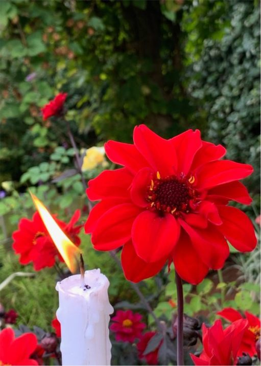 Red flowers against a hedgerow backdrop, and a candle lit for Diddley.