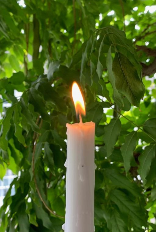 A candle lit for Diddley, with the green leaves of a tree in soft focus behind.