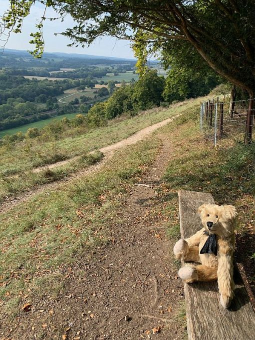 Bertie on a bench at Denbies Hillside.