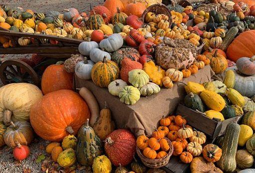 Wisley Titbits: The Pumpkins.