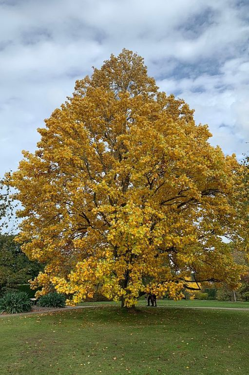 Wisley Titbits: The Tree.