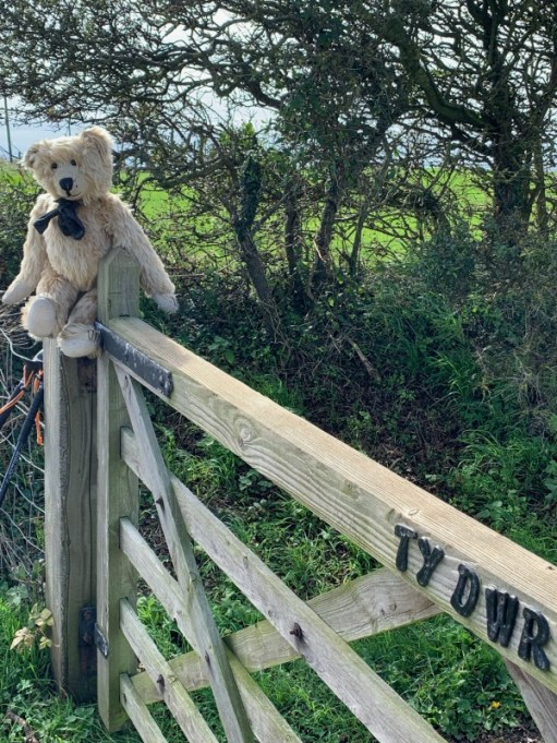 Bertie sat on the post of a gate to Ty Dwr.