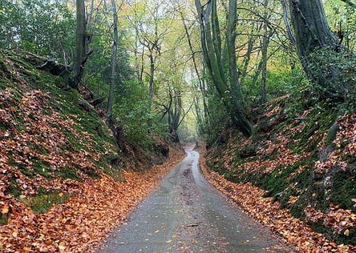 A sunken tree-lined lane.